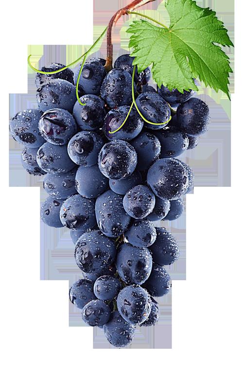 grapes1-free-img